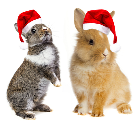 little baby rabbits with a red santa cap