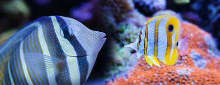 beautiful aquarium fish in a sea aquarium Stock Photo