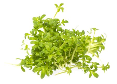 cress sprouts (Lepidium sativum) isolated on a white background Archivio Fotografico