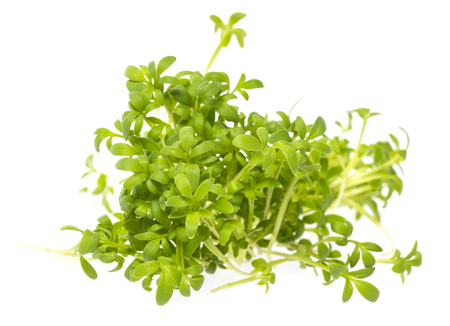 cress sprouts (Lepidium sativum) isolated on a white background Standard-Bild