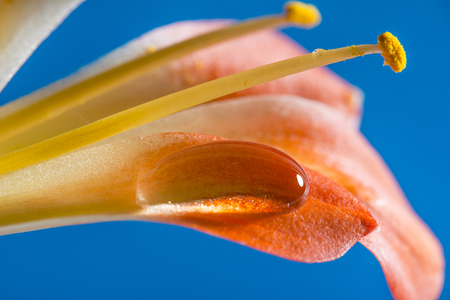 a detail of flower with rain drop - macro photo