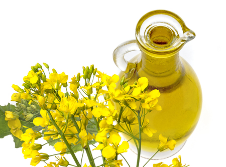 Rapeseed oil (colza) Brassica napus  flowers isolated on white