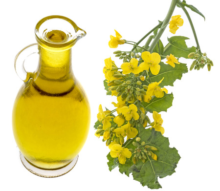 Rapeseed oil in a glass bottle isolated on a white background