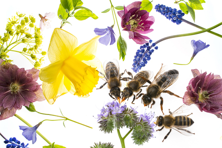 Spring flowers and bees drinking nectar stock photo picture and spring flowers and bees drinking nectar stock photo 103254839 mightylinksfo