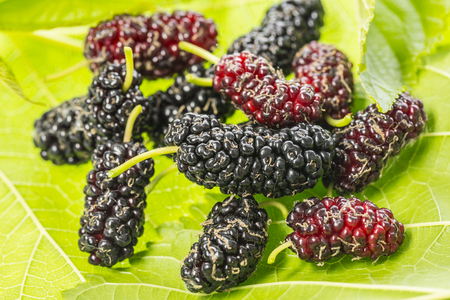 mulberry - Morus nigra - healthy fruit close up
