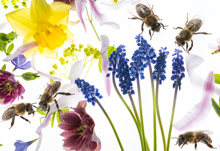 Spring flowers and bees on white background stock photo picture and spring flowers and bees on white background stock photo 103257611 mightylinksfo