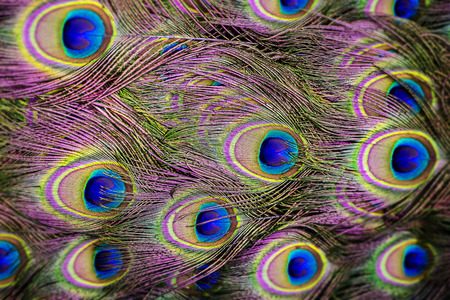 background from peacock feathers close up Standard-Bild