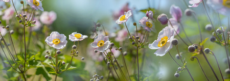 The panoramic view beautiful garden flower close up Stock Photo