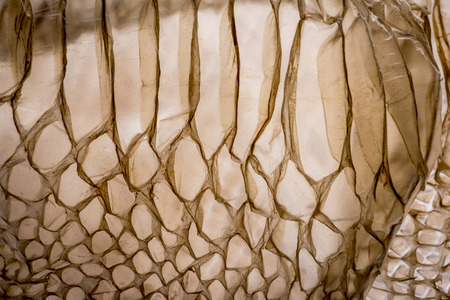 snake skin - texture close up in the detail