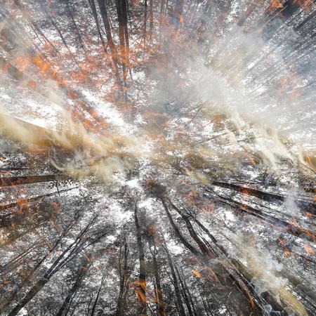 Fire - dry forest - smoke and flames Reklamní fotografie