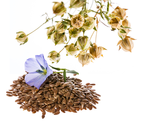 flax seed, linseed - isolated on a white background