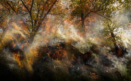 forest with old big trees in fire - flames and smoke Reklamní fotografie