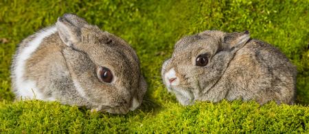 little rabbit on green moss