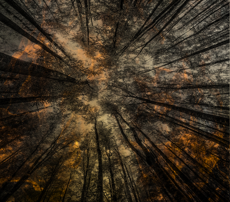 Fire - burning forest