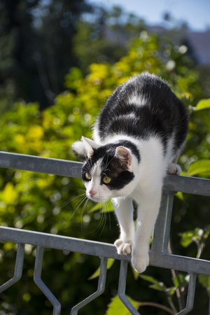 a beautiful cat is walking on a balcony banisters