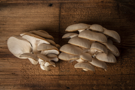 Oyster mushrooms - Pleurotus ostreatus close up