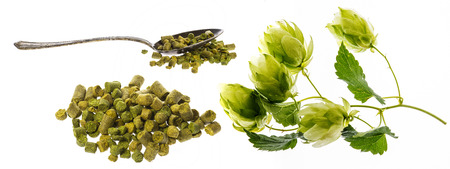 Hop plant and hop pellets for beer preparing - isolated on a white background
