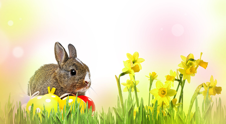 little rabbit and easter eggs isolated Stock Photo