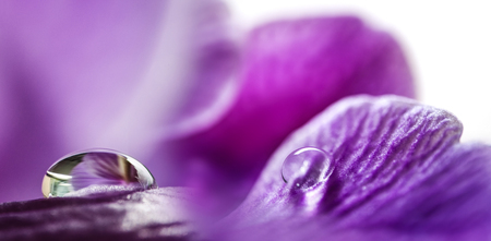 flower petals (orchid) with rain drops - macro picture