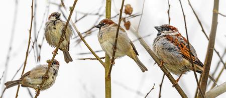 sparow bird on a branch Фото со стока