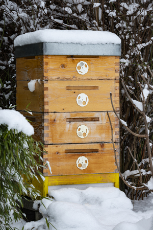 bee hive in winter - bee breeding (Apis mellifera) close up