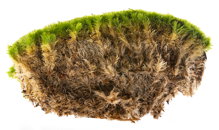 moss isolated on a white background close up Reklamní fotografie