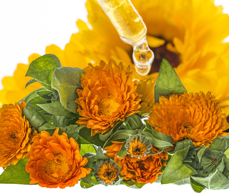 herbal extract from marigold flower (Calendula officinalis)