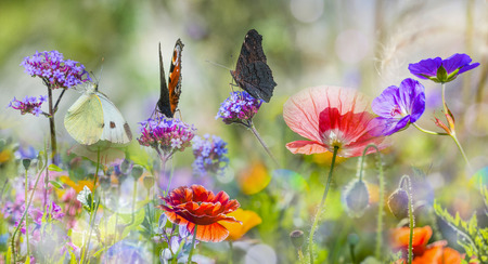 summer meadow with red poppies and butterflies Stock fotó