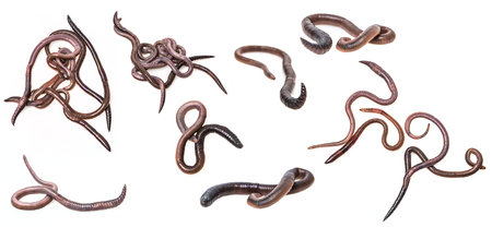 earthworms on a white background - collection Stock Photo