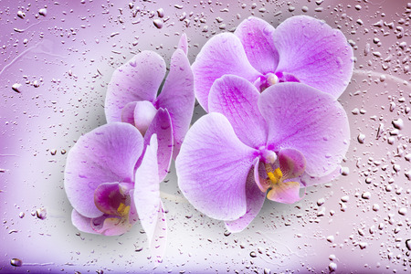 orchid on dewy background