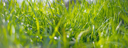grass with dew drops and a light bokeh Stockfoto