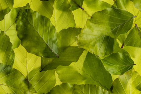 background from spring green leaves - macro detail 写真素材