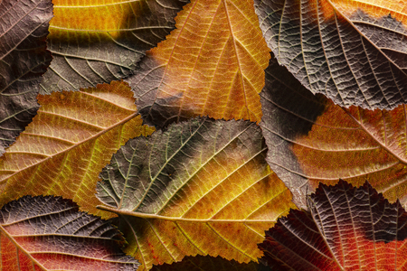 red and yellow foliage close up in the detail