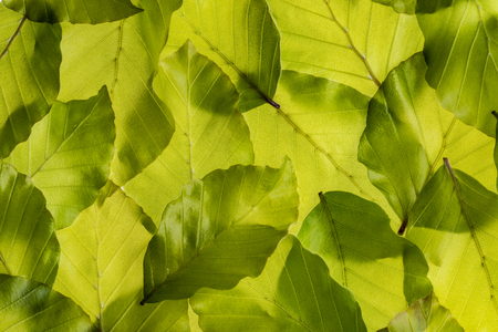 the background from spring green leaves