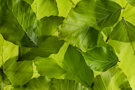 background from spring green leaves - macro
