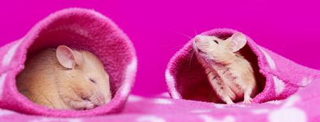 cute little mice sleeping in a sleeves
