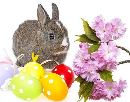 little rabbit and easter eggs Reklamní fotografie