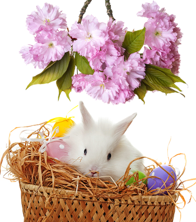 white easter rabbit and easter eggs