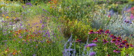 perenial garden flower close up in the garden