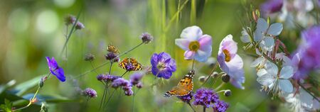 The panoramic view the garden with flowers and butterflies Stock fotó