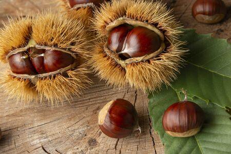 Castañas dulces - Castanea sativa sobre una mesa de madera antigua