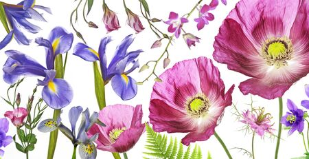 three poppies, irises and other flowers on white background Stock Photo