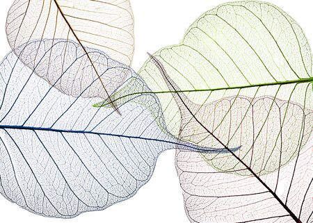 colored leaves on white background - textured background