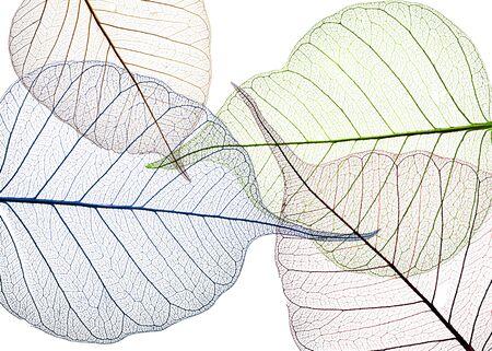 kolorowe liście na białym tle - teksturowane tło
