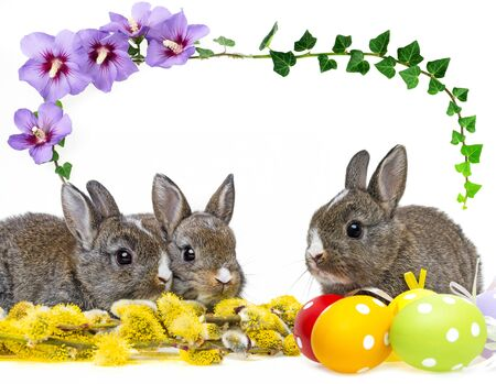 two little rabbits and spring flowering branch