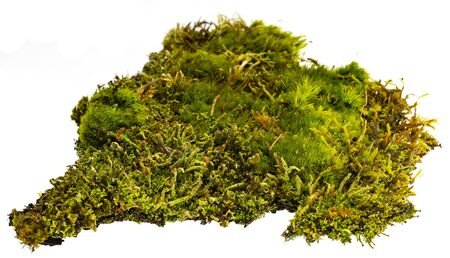 moss maro detail isolated on white