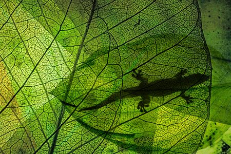 lizard silhouette on green leaf close up in the detail Stok Fotoğraf