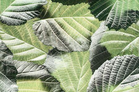 green foliage close up in the detail Фото со стока