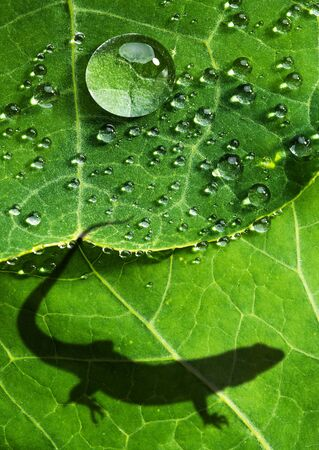 shadow of lizard on a green leaf  Stockfoto