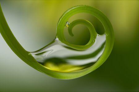 plant with dew drops - macro photography Stockfoto